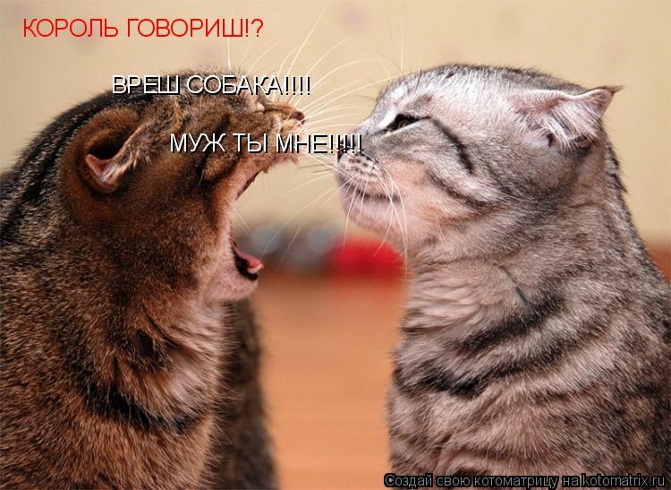 Котоматрица: КОРОЛЬ ГОВОРИШ!? ВРЕШ СОБАКА!!!! МУЖ ТЫ МНЕ!!!!!