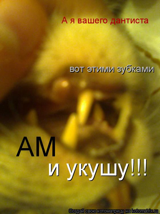 Котоматрица: А я вашего дантиста вот этими зубками АМ и укушу!!!