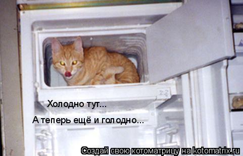 Котоматрица: Холодно тут...  А теперь ещё и голодно...