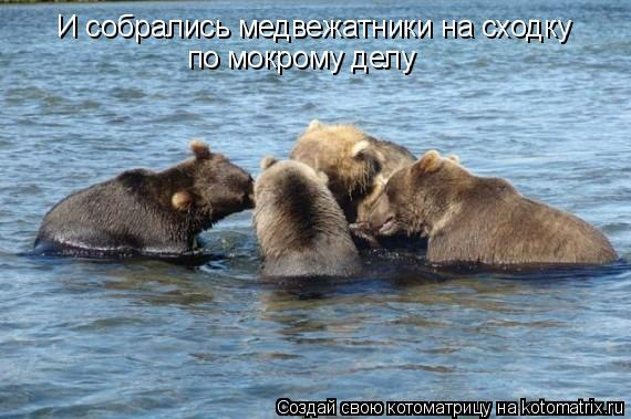 Котоматрица: И собрались медвежатники на сходку по мокрому делу