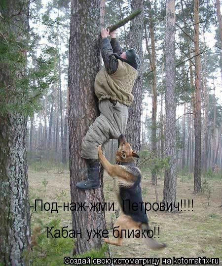 Котоматрица: -Под-наж-жми, Петрович!!!!   Кабан уже близко!!