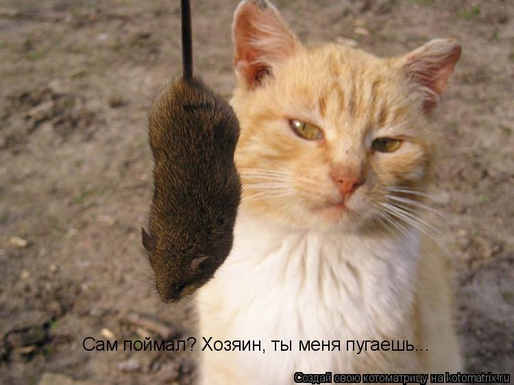 если кошку стерилизовать будет ли она ловить мышей