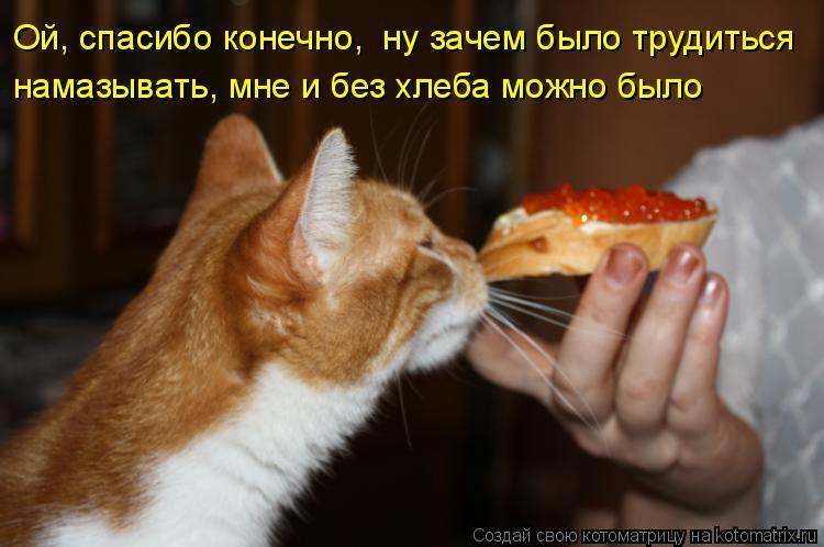 Котоматрица: Ой, спасибо конечно,  ну зачем было трудиться намазывать, мне и без хлеба можно было
