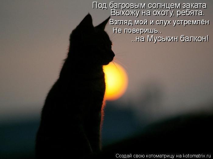 Котоматрица: Под багровым солнцем заката Выхожу на охоту, ребята. Взгляд мой и слух устремлён Не поверишь.. ..на Муськин балкон!