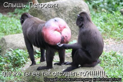 Котоматрица: Слышь, Петрович,  где же ты ее так отсидел-то?!!!!!!!!..............