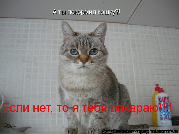 Котоматрица: А ты покормил кошку?! Если нет, то я тебя покараю!!!!