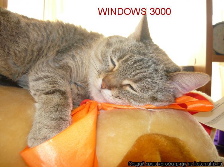 Котоматрица: WINDOWS 3000