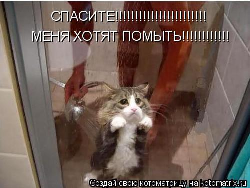 Котоматрица: СПАСИТЕ!!!!!!!!!!!!!!!!!!!!!!! МЕНЯ ХОТЯТ ПОМЫТЬ!!!!!!!!!!!!