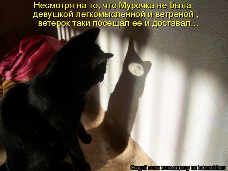 Котоматрица: Несмотря на то, что Мурочка не была   девушкой легкомысленной и ветреной , ветерок таки посещал ее и доставал...