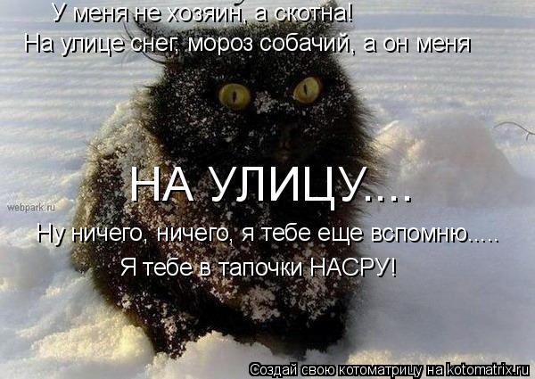 Котоматрица: У меня не хозяин, а скотна! На улице снег, мороз собачий, а он меня  НА УЛИЦУ.... Ну ничего, ничего, я тебе еще вспомню..... Я тебе в тапочки НАСРУ!