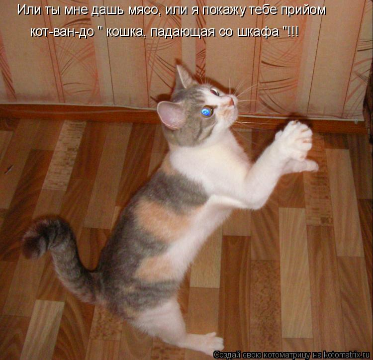 """Котоматрица: Или ты мне дашь мясо, или я покажу тебе прийом кот-ван-до """" кошка, падающая со шкафа """"!!!"""