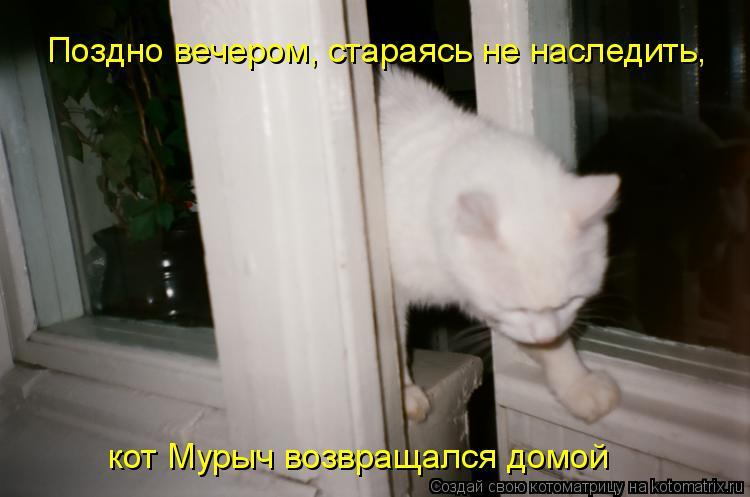 Котоматрица: Поздно вечером, стараясь не наследить, кот Мурыч возвращался домой
