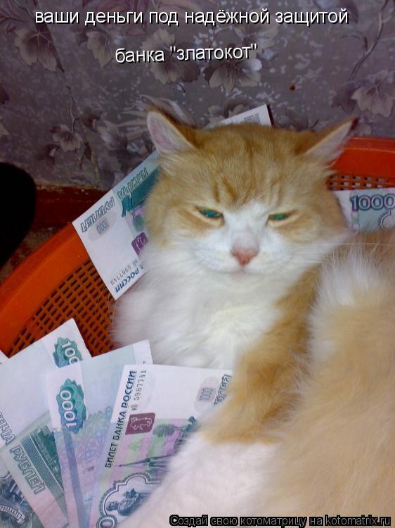 """Котоматрица: ваши деньги под надёжной защитой банка """"златокот"""""""