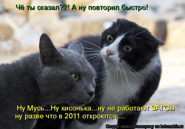 Котоматрица: Чё ты сказал??! А ну повторил быстро! Ну Мусь...Ну кисонька...ну не работают ЗАГСы ну разве что в 2011 откроются....