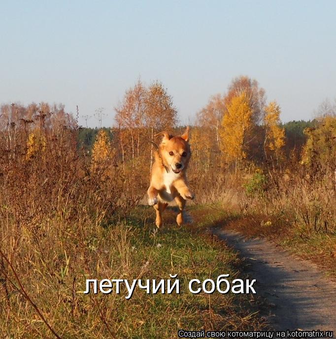 Котоматрица: летучий собак