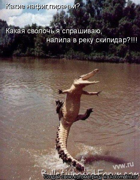 Котоматрица: Какие нафиг,пираньи? Какая сволочь,я спрашиваю, налила в реку скипидар?!!!