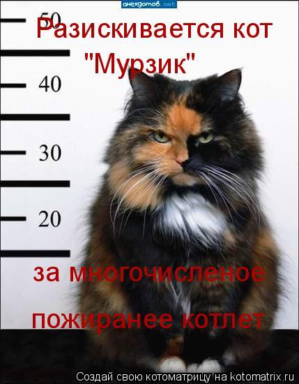 """Котоматрица: Разискивается кот  """"Мурзик"""" за многочисленое пожиранее котлет"""