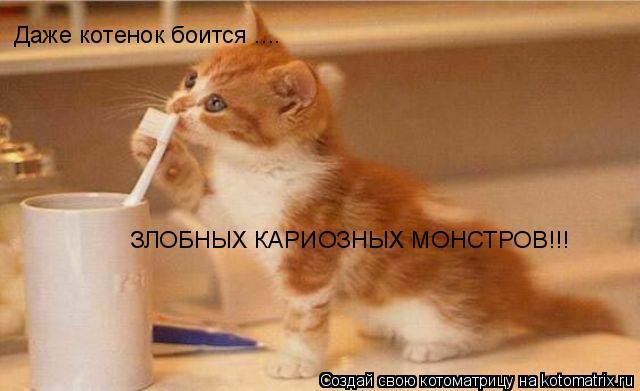 Котоматрица: Даже котенок боится .... ЗЛОБНЫХ КАРИОЗНЫХ МОНСТРОВ!!!