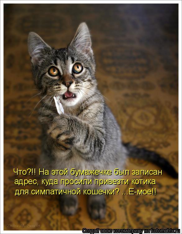Котоматрица: Что?!! На этой бумажечке был записан адрес, куда просили привезти котика для симпатичной кошечки? ...Е-мое!!