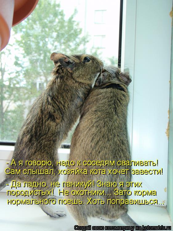 Котоматрица: - А я говорю, надо к соседям сваливать! Сам слышал, хозяйка кота хочет завести! - Да ладно, не паникуй! Знаю я этих породистых!  Не охотники... За