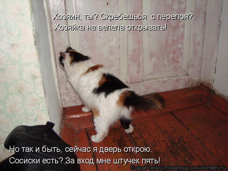 Котоматрица: Сосиски есть? За вход мне штучек пять! Но так и быть, сейчас я дверь открою. Хозяйка не велела открывать! Хозяин, ты? Скребешься  с перепоя?