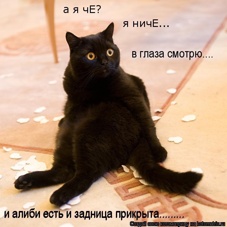 Котоматрица: и алиби есть и задница прикрыта......... и алиби есть и задница прикрыта......... в глаза смотрю.... я ничЕ... а я чЕ?