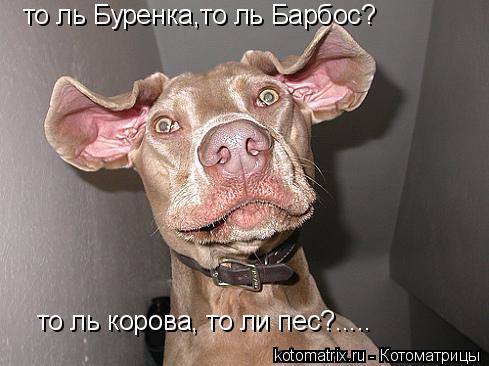 Котоматрица: то ль Буренка,то ль Барбос? то ль корова, то ли пес?.....