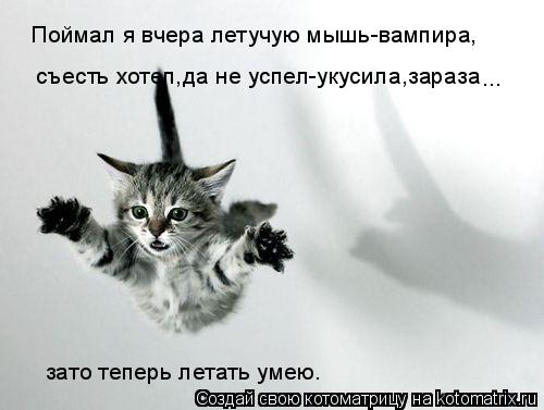 Котоматрица: Поймал я вчера летучую мышь-вампира, съесть хотел,да не успел-укусила,зараза зато теперь летать умею. ...