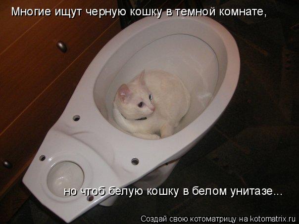 Котоматрица: Многие ищут черную кошку в темной комнате, но чтоб белую кошку в белом унитазе...