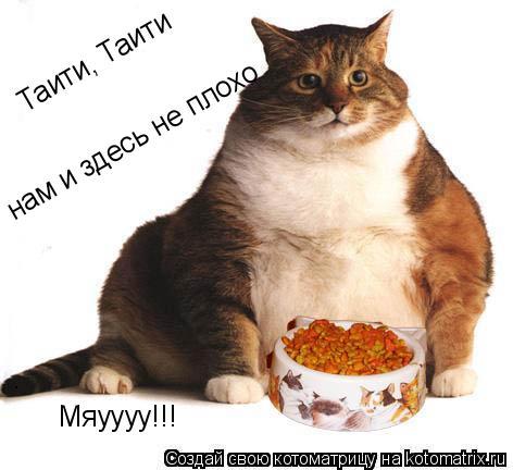 Котоматрица: Таити, Таити нам и здесь не плохо Мяуууу!!!