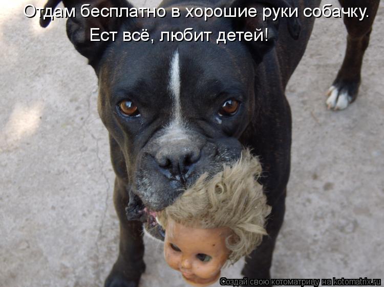 Котоматрица: Отдам бесплатно в хорошие руки собачку. Ест всё, любит детей!