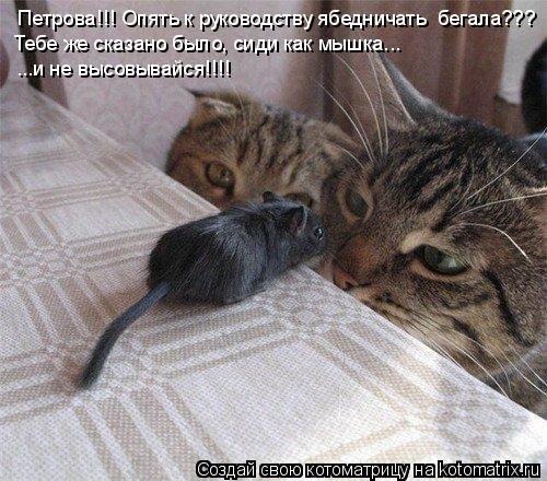 Котоматрица: Петрова!!! Опять к руководству ябедничать  бегала??? Тебе же сказано было, сиди как мышка... ...и не высовывайся!!!!