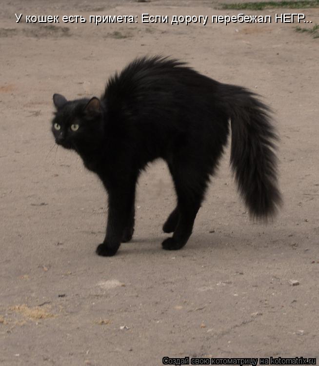 Котоматрица: У кошек есть примета: Если дорогу перебежал НЕГР...