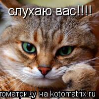 Котоматрица: слухаю вас!!!!