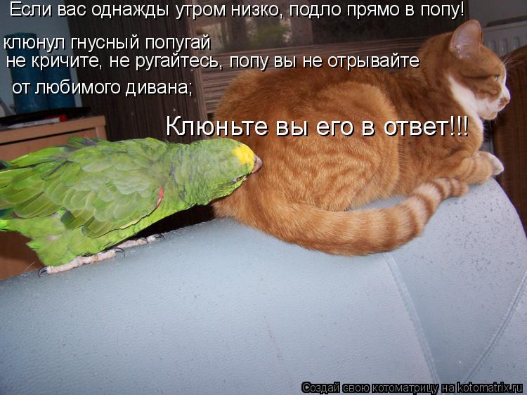 Котоматрица: клюнул гнусный попугай  от любимого дивана;  не кричите, не ругайтесь, попу вы не отрывайте Если вас однажды утром низко, подло прямо в попу!