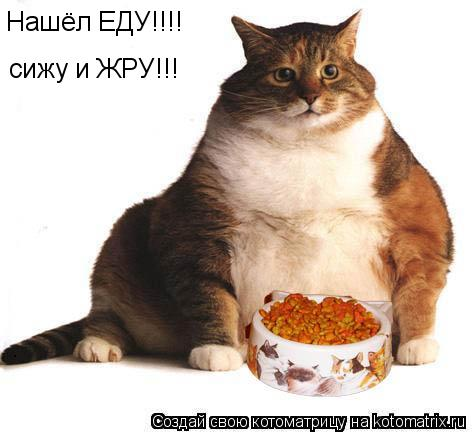 Котоматрица: Нашёл ЕДУ!!!! сижу и ЖРУ!!!