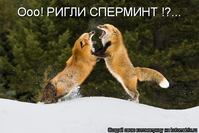 Котоматрица: Ооо! РИГЛИ СПЕРМИНТ !?...