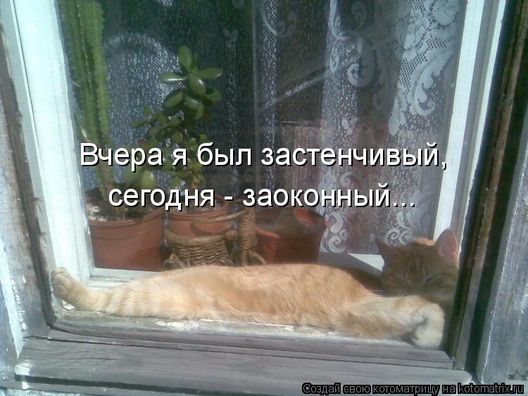 Котоматрица: Вчера я был застенчивый, сегодня - заоконный...
