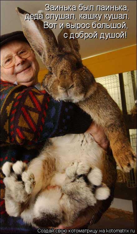 Котоматрица: Заинька был паинька, деда слушал, кашку кушал. Вот и вырос большой, с доброй душой!