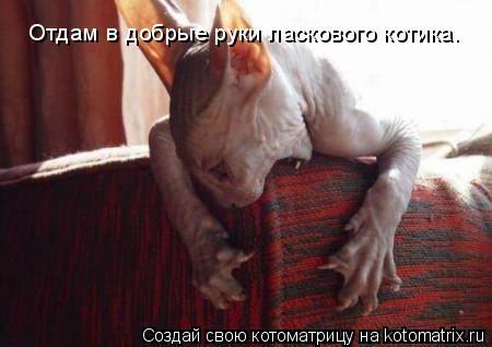 Котоматрица: Отдам в добрые руки ласкового котика.