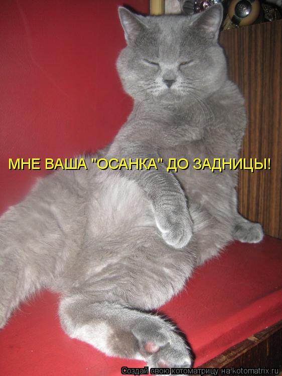 "Котоматрица: МНЕ ВАША ""ОСАНКА"" ДО ЗАДНИЦЫ!"