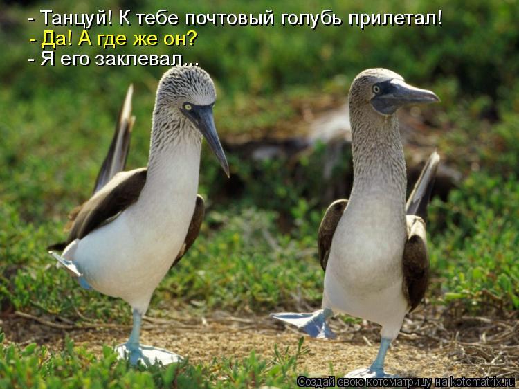 Котоматрица: - Танцуй! К тебе почтовый голубь прилетал! - Да! А где же он? - Я его заклевал...