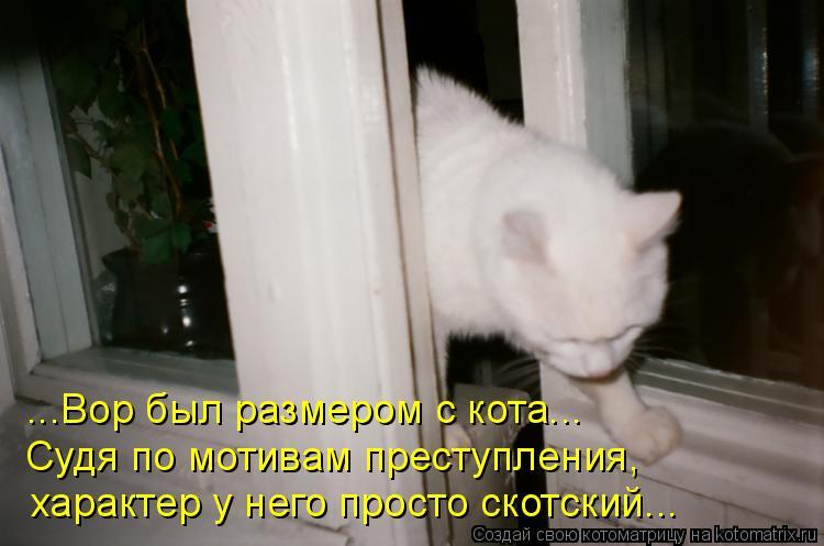 Котоматрица: ...Вор был размером с кота...  Судя по мотивам преступления, характер у него просто скотский...