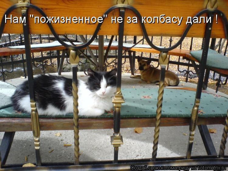 """Котоматрица: Нам """"пожизненное"""" не за колбасу дали !"""