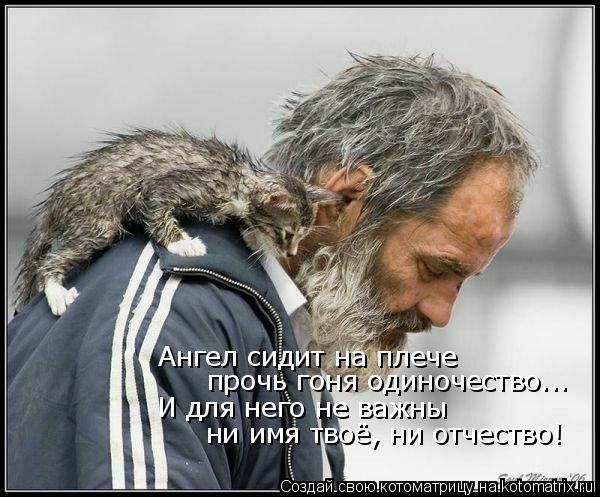 Котоматрица: Ангел сидит на плече прочь гоня одиночество... И для него не важны ни имя твоё, ни отчество!