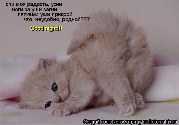 Котоматрица: спи моя радость, усни ноги за уши загни пятками уши прикрой что, неудобно, родной??? Good night!!!