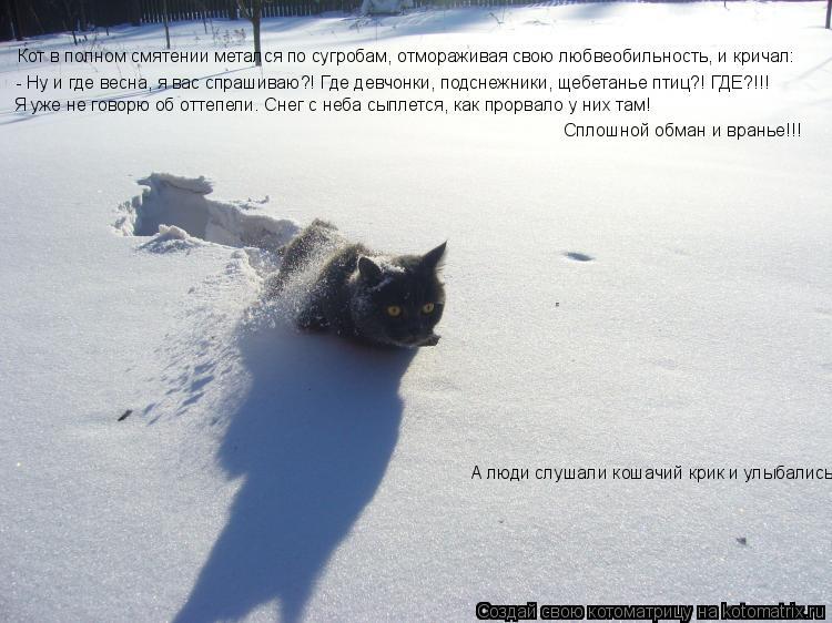 Котоматрица: Кот в полном смятении метался по сугробам, отмораживая свою любвеобильность, и кричал: - Ну и где весна, я вас спрашиваю?! Где девчонки, подсн