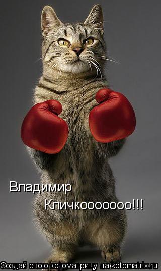 Котоматрица: Владимир Кличкооооооо!!!