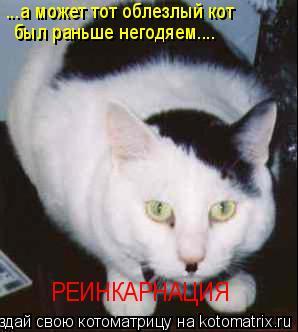 Котоматрица: РЕИНКАРНАЦИЯ ...а может тот облезлый кот  был раньше негодяем....