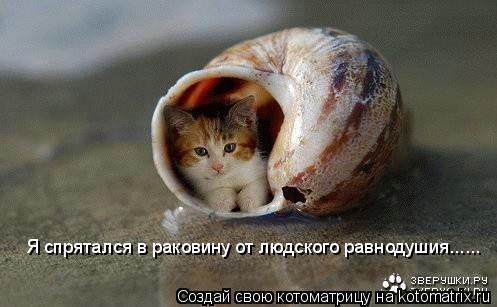 Котоматрица: Я спрятался в раковину от людского равнодушия......